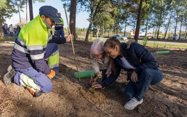 Voluntários reflorestam Pinhal de Negreiros
