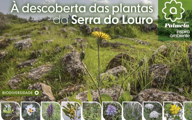 No âmbito do Dia Mundial da Floresta, dê um passeio ao ar livre e descubra as Plantas da Serra do Louro!